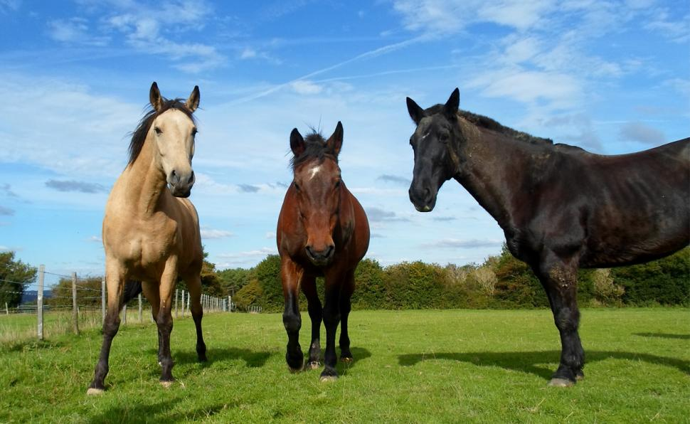 Horses Health & Advice