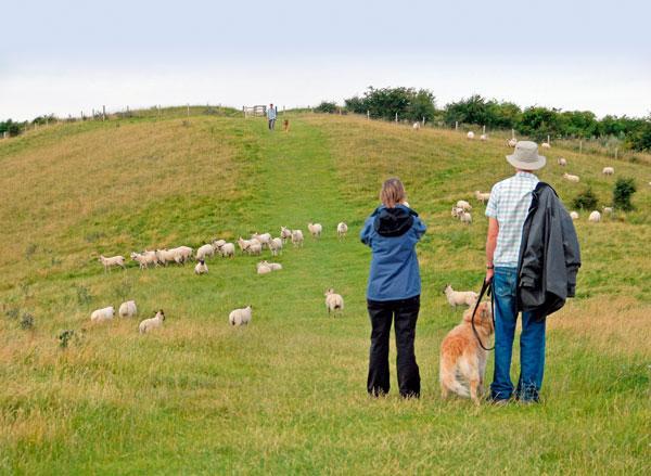 Sheep Worrying